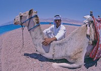Beduin-with-Camel