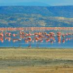 Lake-Natron.-Tanzania7