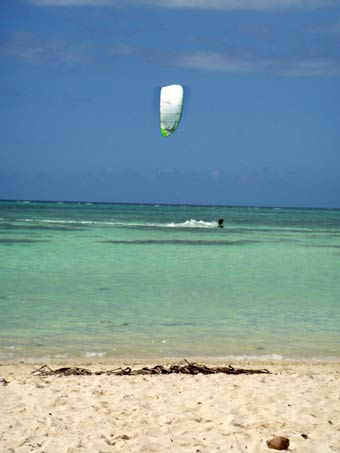 Tobago_kite_1