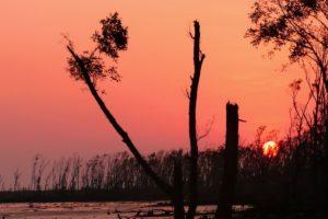 bluzhdayushhie-ogni-bengalskogo-bolota1