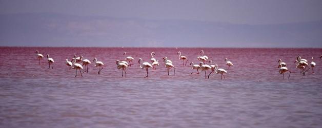 Озеро Туз, Турция