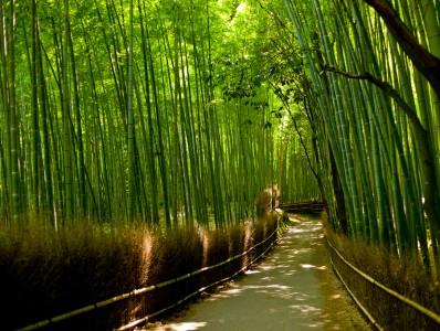 Сагано — Бамбуковый лес (Япония)