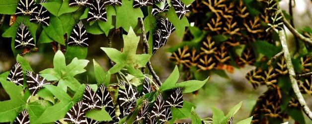 Petaloudes — Долина бабочек (Греция)
