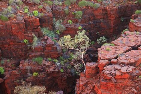 Национальный парк Кариджини (Австралия)